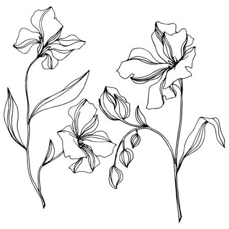 Vector Flax floral botanical flowers. Wild spring leaf wildflower isolated. Black and white engraved ink art. Isolated flax illustration element on white background. Stok Fotoğraf - 130116250