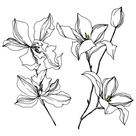 Vector Orchid floral botanical flowers. Wild spring leaf wildflower isolated. Black and white engraved ink art. Isolated orchids illustration element on white background. Stok Fotoğraf - 130117751
