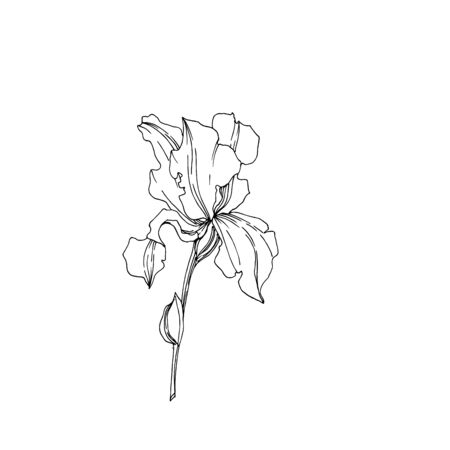 Vector Iris floral botanical flowers. Wild spring leaf wildflower isolated. Black and white engraved ink art. Isolated irises illustration element on white background. Stok Fotoğraf - 130116483