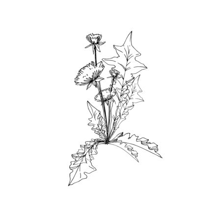 Vector Wildflowers floral botanical flowers. Wild spring leaf wildflower isolated. Black and white engraved ink art. Isolated flower illustration element. Stockfoto - 130142284