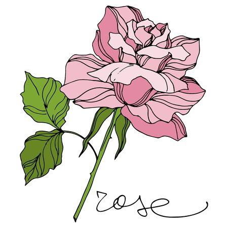 Vector Rose floral botanical flowers. Wild spring leaf wildflower isolated. Engraved ink art. Isolated roses illustration element on white background.