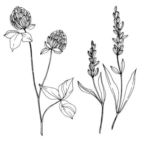 Vektor wildflower botanische Blumenblumen. Wilde Frühlingsblatt Wildblume isoliert. Schwarz-weiß gravierte Tinte Art.-Nr. Isolierte Wildblumen-Illustrationselement.