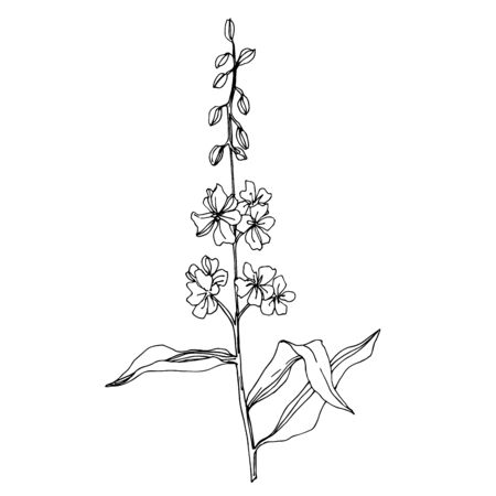 Vector Wildflower floral botanical flowers. Wild spring leaf wildflower isolated. Black and white engraved ink art. Isolated flower illustration element. Stok Fotoğraf - 130116795