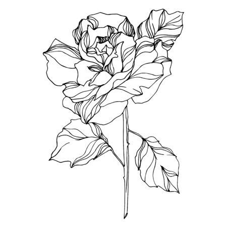 ベクターバラ花の植物の花。野生の春の葉野生の花が孤立しています。黒と白の刻印されたインクアート。白い背景に孤立したバラのイラスト要素。