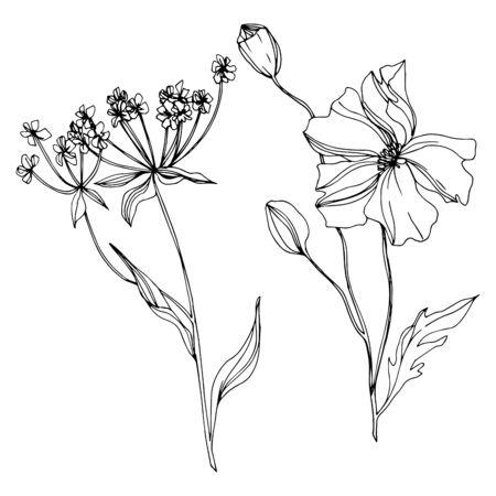 Fleurs botaniques florales de vecteur de fleurs sauvages. Fleur sauvage de feuille de printemps sauvage isolée. Art d'encre gravé en noir et blanc. Élément d'illustration de fleurs isolées.