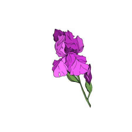 Vector Iris floral botanical flowers. Wild spring leaf wildflower isolated. Black and white engraved ink art. Isolated irises illustration element on white background. Stok Fotoğraf - 130118260