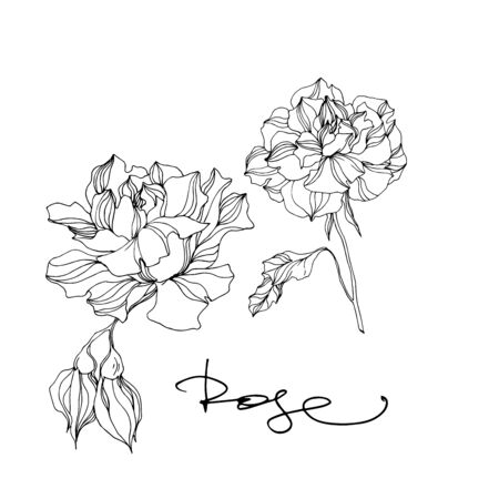 Vector Roses floral botanical flowers. Wild spring leaf wildflower isolated. Black and white engraved ink art on white background. Isolated roses illustration element.