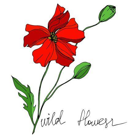 Fleurs botaniques florales de vecteur de fleurs sauvages. Fleur sauvage de feuille de printemps sauvage isolée. Art d'encre gravé en noir et blanc. Élément d'illustration de fleurs isolées. Vecteurs