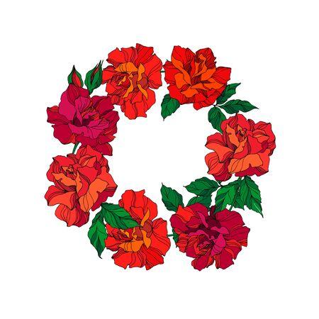 Fleur botanique florale de vecteur Rose. Fleur sauvage de feuille de printemps sauvage isolée. Art d'encre gravée verte et rouge. Carré d'ornement de bordure de cadre sur fond blanc. Vecteurs