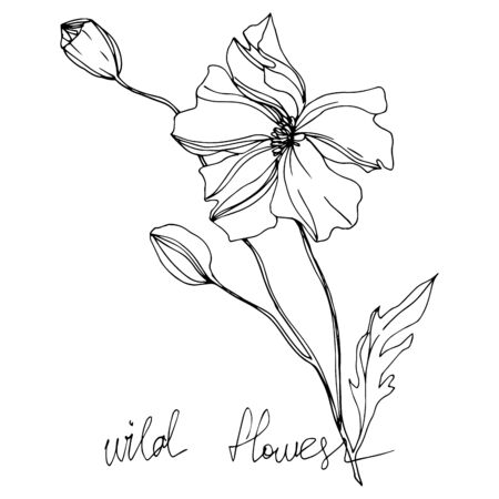 Vector Wildflowers floral botanical flowers. Wild spring leaf wildflower isolated. Black and white engraved ink art. Isolated flowers illustration element. Ilustração