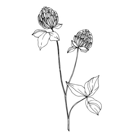 Vector wildflower floral botanical flowers. Wild spring leaf wildflower isolated. Black and white engraved ink art. Isolated wildflowers illustration element. Stok Fotoğraf - 130117832