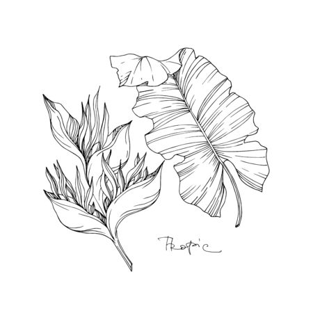 Vector Tropical floral botanical flowers. Wild spring leaf wildflower isolated. Black and white engraved ink art. Isolated flower illustration element on white background. Ilustração