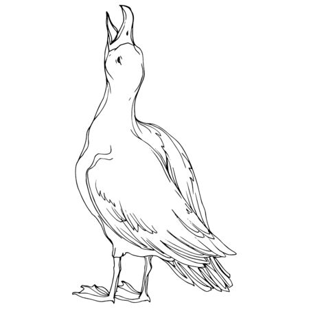 Vector Sky bird seagull in a wildlife. Black and white engraved ink art. Isolated seagull illustration element on white background. Standard-Bild - 130143684