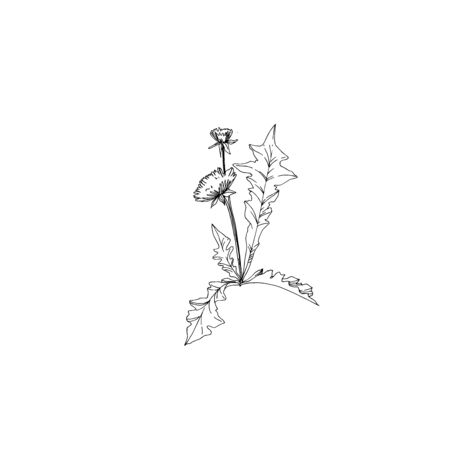 Vector Wildflowers floral botanical flowers. Wild spring leaf wildflower isolated. Black and white engraved ink art. Isolated flower illustration element.