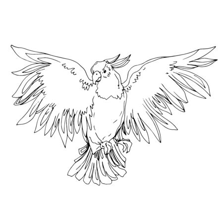 Vector Sky bird cockatoo in a wildlife isolated. Wild freedom, bird with a flying wings. Black and white engraved ink art. Isolated parrot illustration element. Stock Illustratie