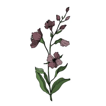 Vector Wildflower floral botanical flowers. Wild spring leaf wildflower isolated. Black and white engraved ink art. Isolated flower illustration element. Ilustração