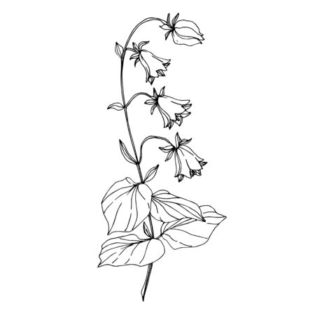 Vector Wildflowers floral botanical flowers. Wild spring leaf wildflower isolated. Black and white engraved ink art. Isolated flower illustration element on white background. Stok Fotoğraf - 130117267