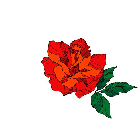 Vector Rose floral botanical flower. Wild spring leaf wildflower isolated. Red and green engraved ink art. Isolated rose illustration element on white background. Ilustração