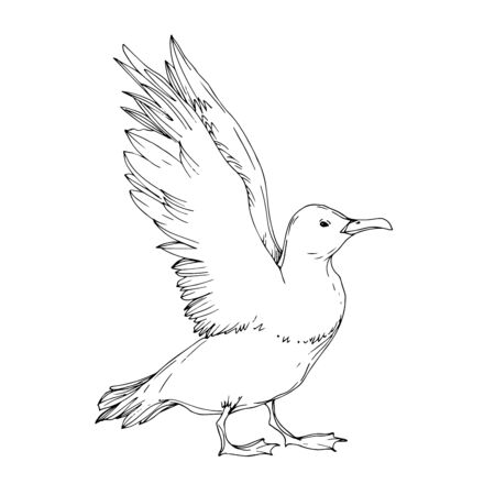Vector Sky bird seagull isolated. Wild freedom, bird with a flying wings. Black and white engraved ink art. Isolated seagull illustration element on white background. 일러스트