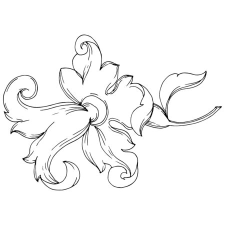 Vector Baroque monogram floral ornament. Baroque design isolated elements. Black and white engraved ink art. Isolated ornaments illustration element on white background.