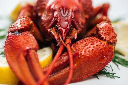 close up view of red lobsters on lemon slices and green herbs on white background