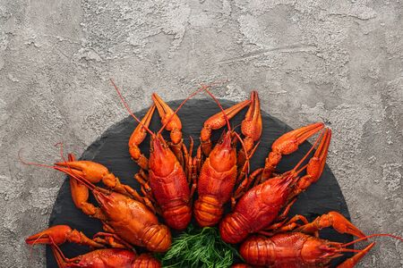 top view of black plate with red lobsters and green herbs on grey textured surface Banco de Imagens