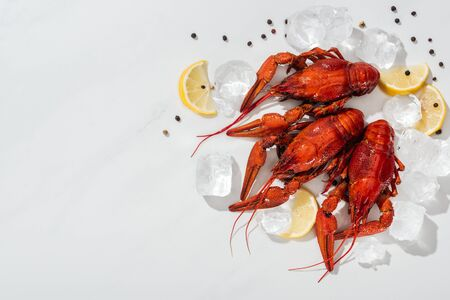 top view of red lobsters, peppers, lemon slices with ice cubes on white background