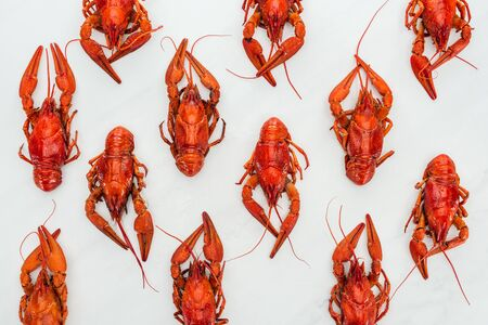 top view of red lobsters on white background
