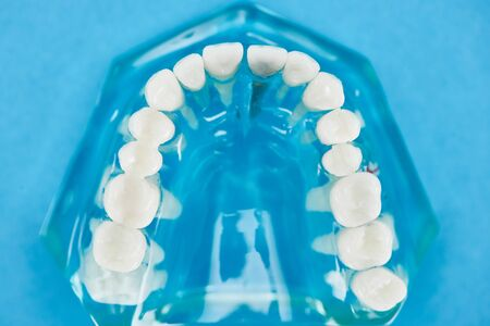 selective focus of teeth model with healthy jaw on blue