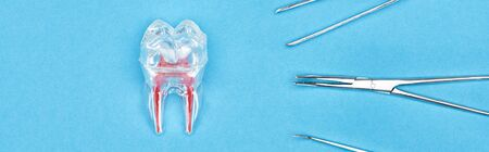 panoramic shot of silicone tooth model with red dental root near set of dental instruments isolated on blue