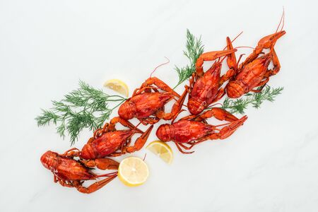 top view of red lobsters, lemon slices and green herbs on white background Banco de Imagens