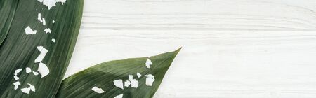 top view of green palm leaves with coconut flakes on wooden surface, panoramic shot