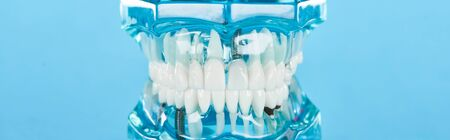 panoramic shot of teeth model with white teeth isolated on blue 写真素材