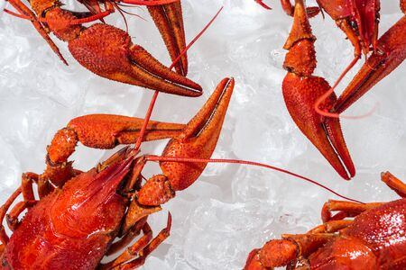 top view of red lobsters on white background with ice cubes Stockfoto