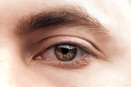close up view of young woman brown eye with eyelashes and eyebrow