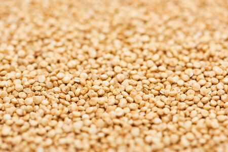uncooked seeds of organic white quinoa