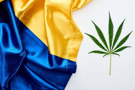 top view of green cannabis leaf near flag of Ukraine on white background Banco de Imagens