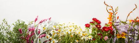 panoramic shot of bunches of diverse wildflowers on white background with copy space