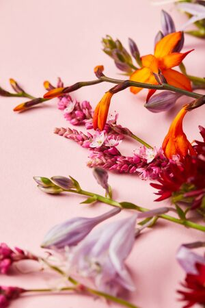 close up view of fresh wildflowers on pink background