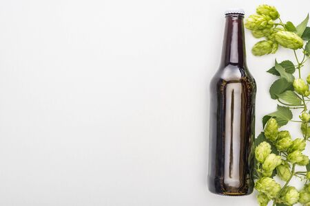 top view of fresh beer in bottle with green hop on white background Stock Photo