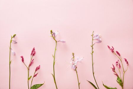 top view of bluebells and wildflowers on pink background with copy space