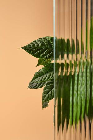 big leaves of plant behind reed glass isolated on beige 版權商用圖片