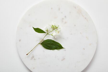 top view of plate with jasmine on white surface