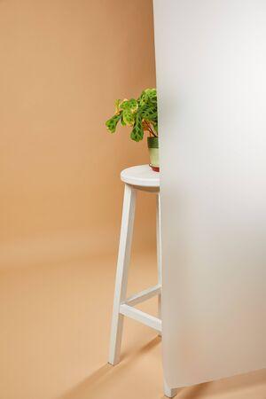 plant with leaves in flowerpot  behind matt glass on beige Reklamní fotografie