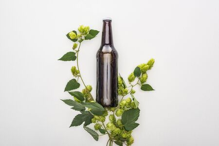 top view of beer in bottle with green hop on white background