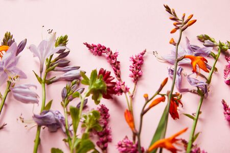 twigs of wildflowers on pink background