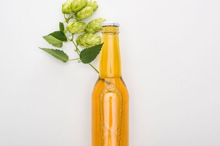top view of beer in bottle with hop on white background