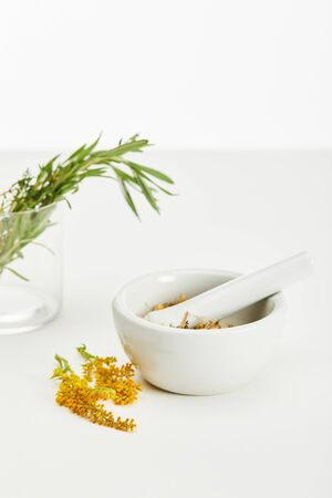 goldenrod twig near mortar and pestle with herbal mix and and glass with fresh plants on white background