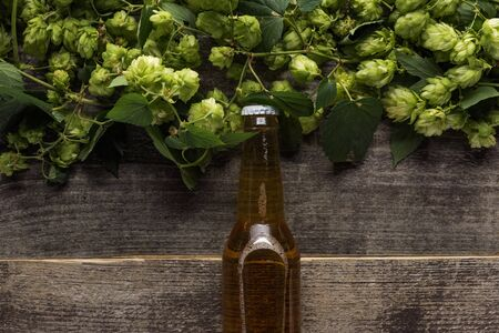 top view of beer near green hop on wooden background