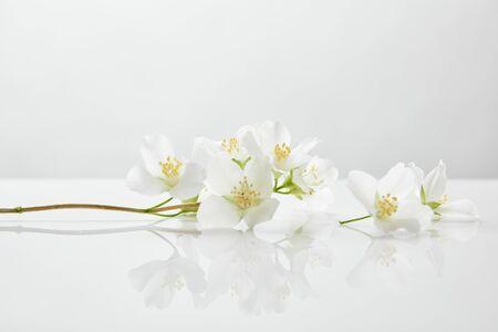 Flores de jazmín frescas y naturales sobre superficie blanca.
